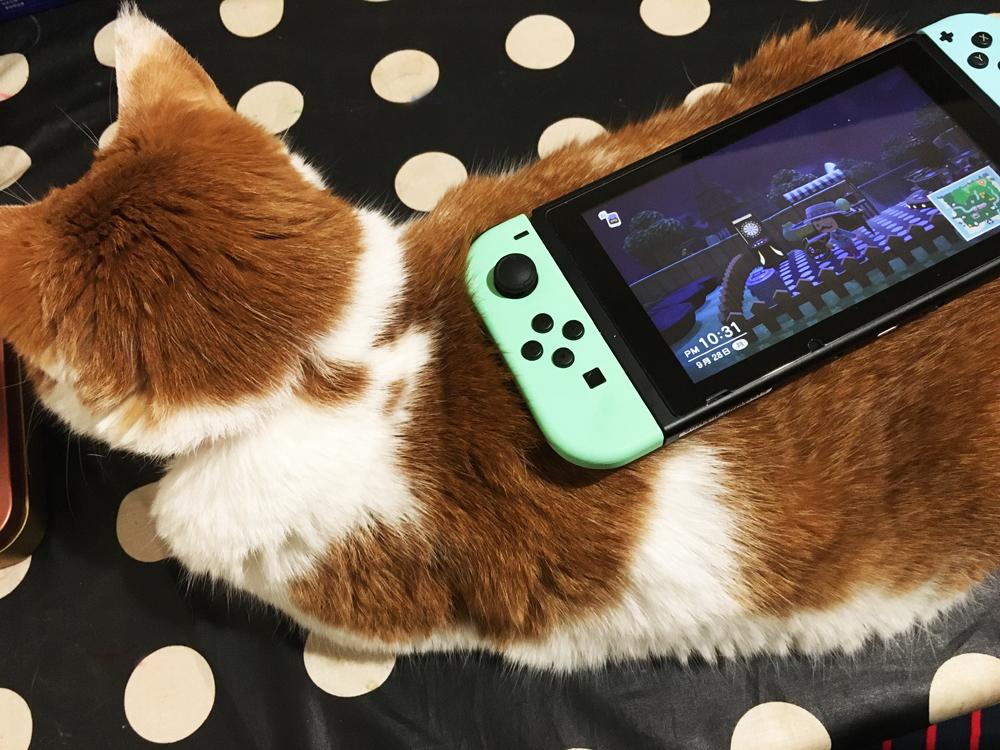 吉祥寺受注会(7):オリジナルの猫の持ち手の新デザイン・2020年秋の新作